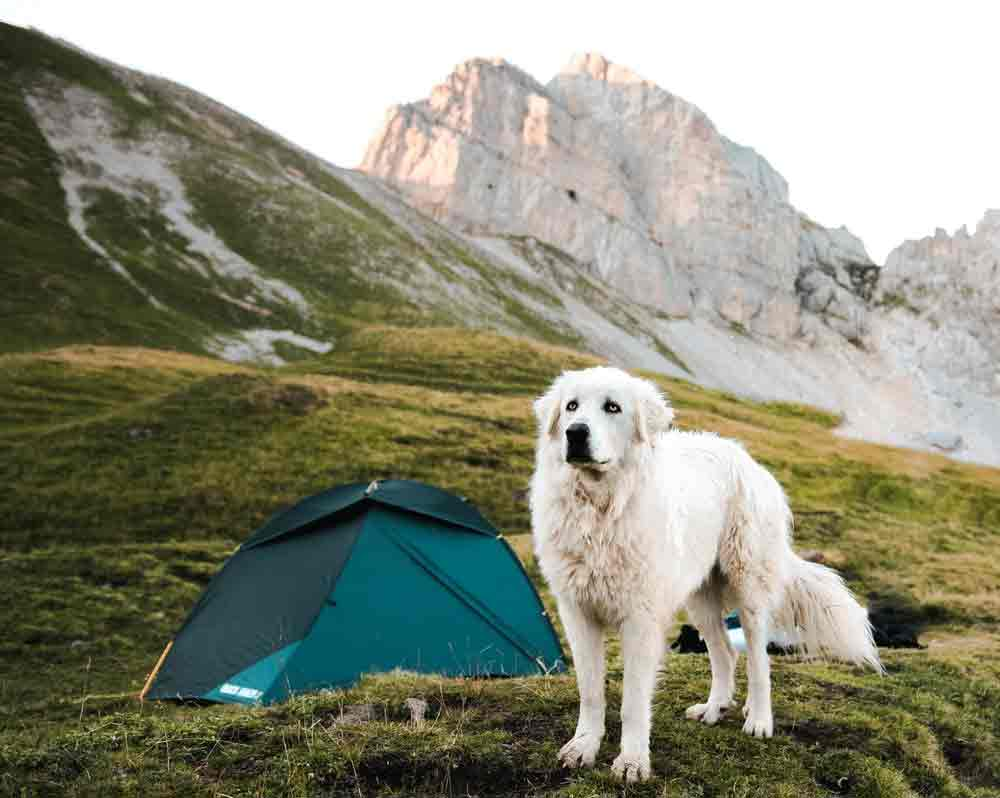 How To Enjoy Camping With Your Pets